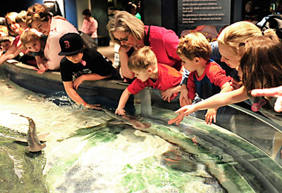 Children touching sharks and rays